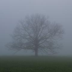 Cades Cove Fog