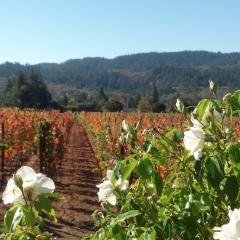 Ledson Winery