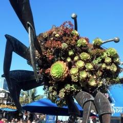 Succulent Crab