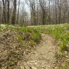 Wildflowers & Appalachian Trail