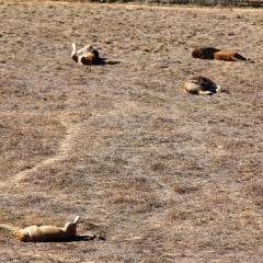 Wild Animal Sanctuary - Lions