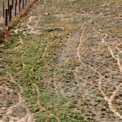 Wild Animal Sanctuary - Tiger Tracks