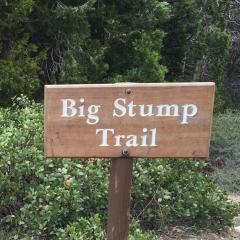 Big Stump Trail