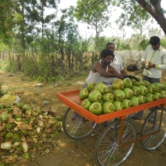 India Coconut Stand